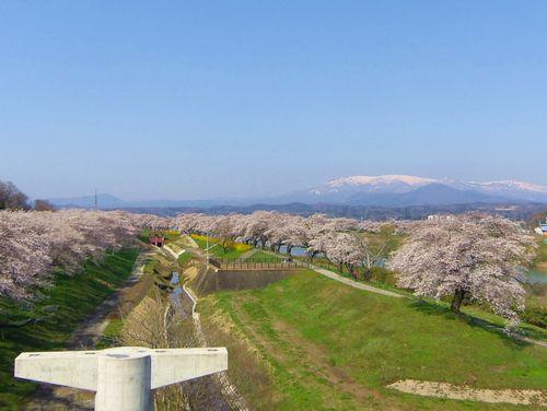 桜2015船岡城址・白石川堤7しばた千桜橋からの眺望