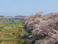 桜2015船岡城址・白石川堤8しばた千桜橋からの眺望