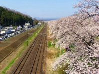 桜2015船岡城址・白石川堤9しばた千桜橋からの眺望