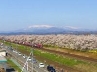 桜2015船岡城址・白石川堤10しばた千桜橋からの眺望貨物列車