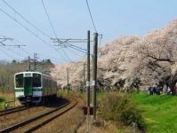 桜2015船岡城址・白石川堤19電車719系