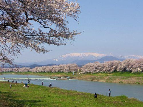 桜2015船岡城址・白石川堤20韮神堰(にらがみぜき)
