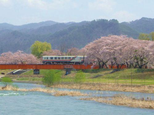 山形鉄道2015桜2野川堤防