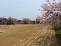 長井市2014桜3伊佐沢の久保桜 伊佐沢小学校
