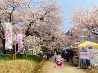 長井市2014桜4伊佐沢の久保桜 屋台