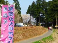長井市2014桜7草岡の大明神桜 売店
