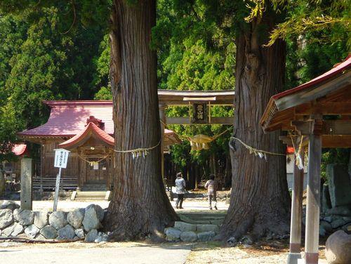長井市2014桜9白兎のしだれ桜 葉山神社
