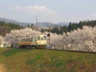山形鉄道2014桜3最上川橋梁