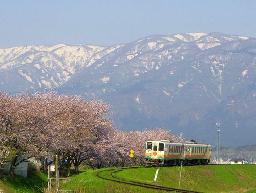 山形鉄道2015桜3最上川橋梁
