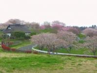 長沼フートピア公園2015桜4