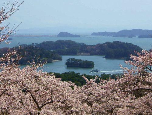 松島西行戻しの松公園2014桜1