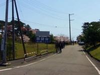 松島西行戻しの松公園2014桜5公園入口