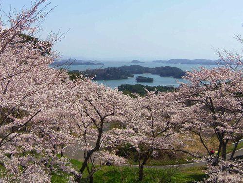 松島西行戻しの松公園2014桜11