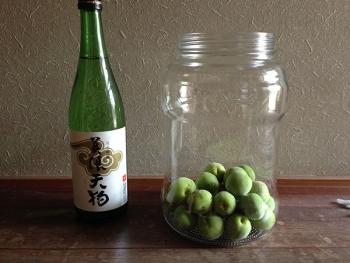 2015梅酒づくり(日本酒)
