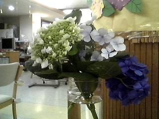 東京都 足立区 介護老人保健施設 千寿の郷 デイケア 紫陽花