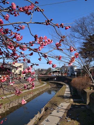 2015-02-04 中正屋 033