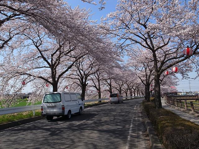 2015-03-31 川越さくら 022