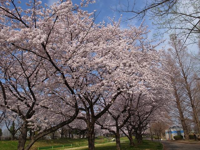 2015-04-01 川越水上公園 006