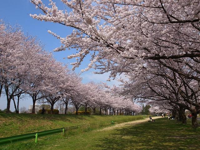 2015-04-01 川越水上公園 003