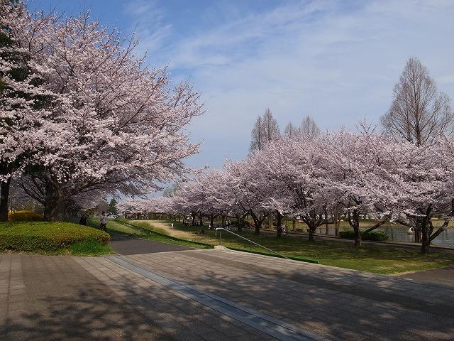 2015-04-01 川越水上公園 020