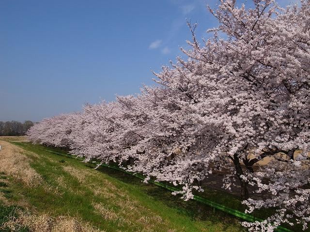 2015-04-01 川越水上公園 011