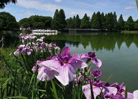 2015-06-10 川越水上公園 005
