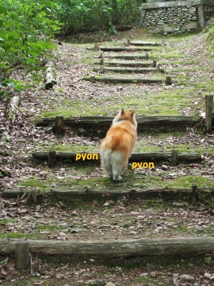 階段頑張った~
