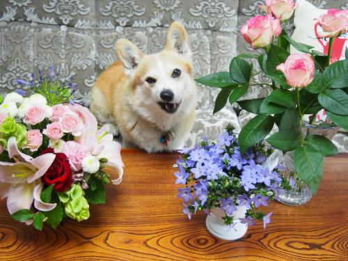 お花と節ちゃん1
