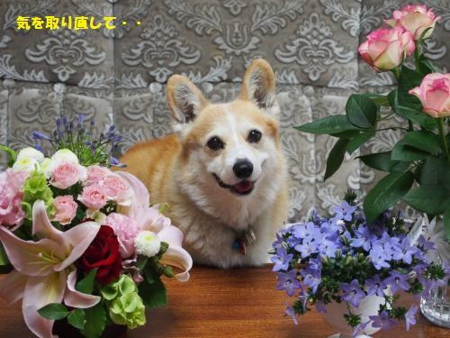 お花と節ちゃん2