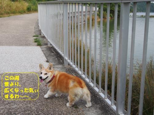 へいそうこお散歩