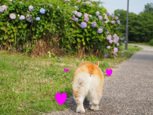 へいそうこお散歩3