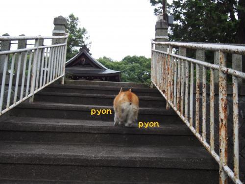 階段ぴょん