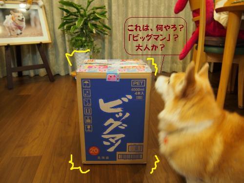なんやこの箱は?