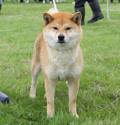 20150405広島展壮犬1