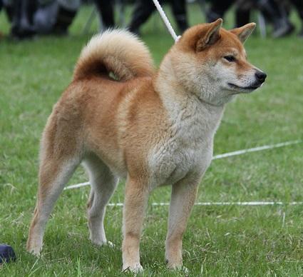 20150405広島展壮犬2