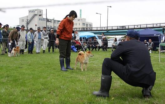 20150405広島展壮犬3