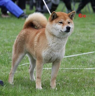 20150405広島展壮犬4