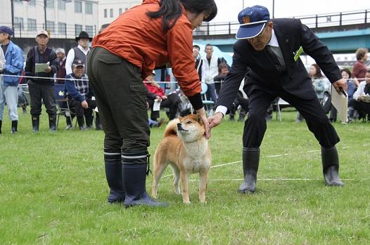 20150405広島展壮犬5