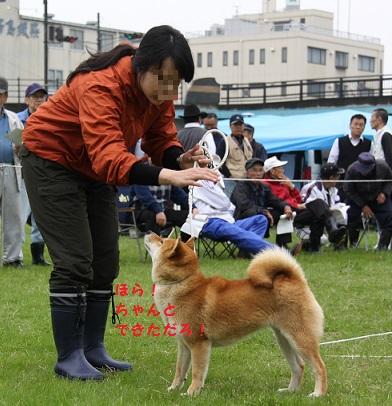 20150405広島展壮犬6