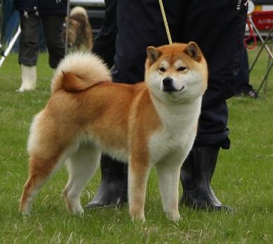 20150405広島展壮犬9