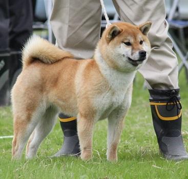20150405広島展壮犬15