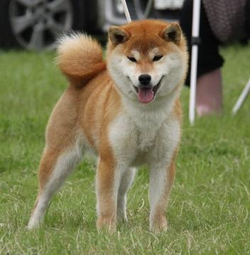20150405広島展壮犬11