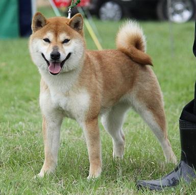 20150405広島展壮犬13