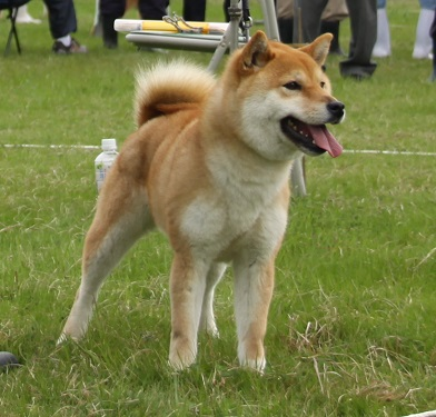 20150405広島展壮犬14