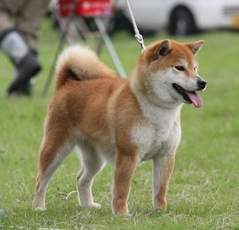 20150405広島展成犬雌1
