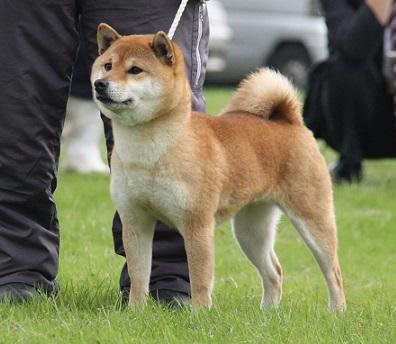 20150405広島展成犬雌6