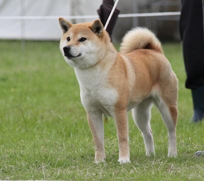 20150405広島展成犬雌7