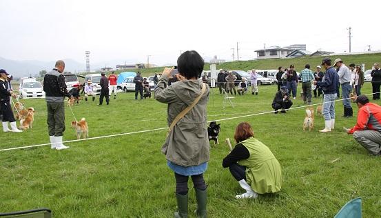 20150405広島展幼犬雌