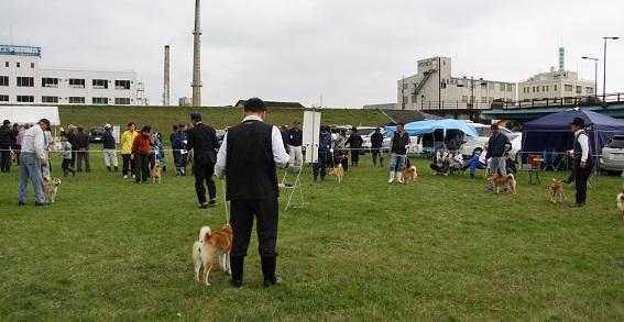 20150405広島展2審壮犬雌1