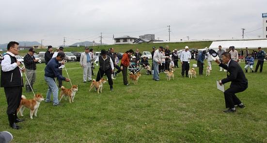 20150405広島展2審壮犬雌5